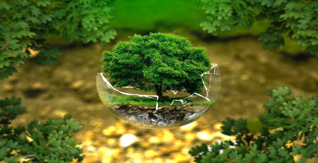 Environment Vs Development Initiative